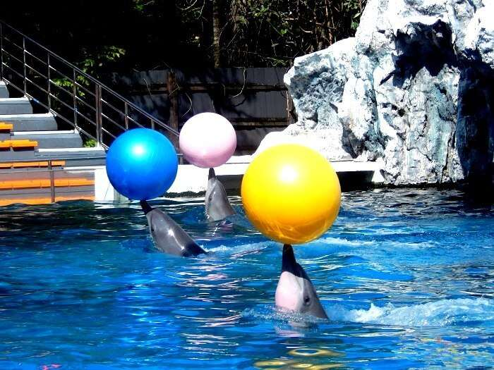Dolphin show in Safari World