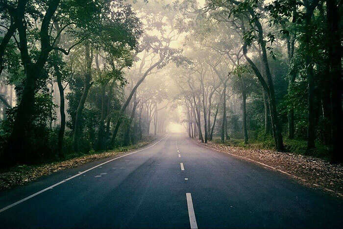 The Ghat Road in Lambasingi perfect for a romantic walk through the fog
