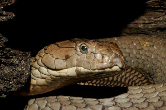 A visit to the Guindy Snake Park is a thrill full day out in Chennai