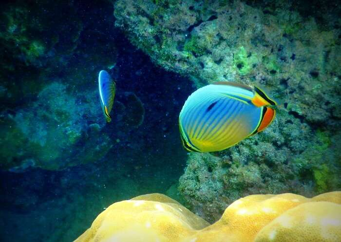 underwater while snorkeling in Andaman