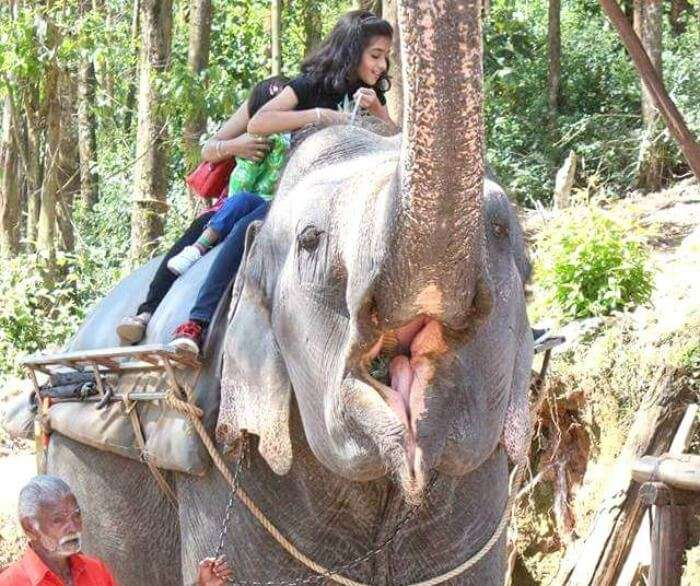 Yateen's elephant ride in Munnar