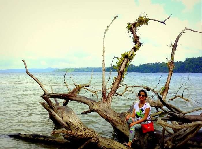 a picturesque tree in Andaman