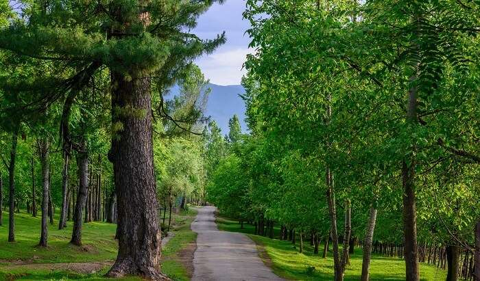 Movie-like mystical trail in Pulwama in Jammu & Kashmir