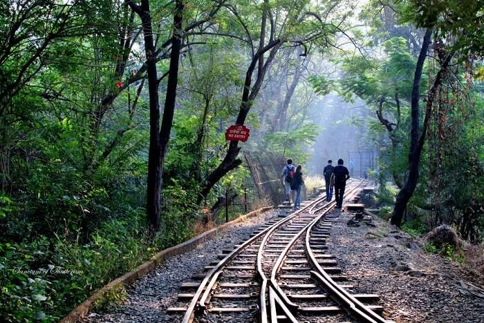 Students walk along the railway track passing through the Sanjay Gandhi National Park