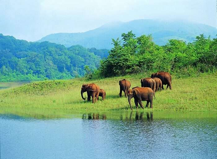 The best place to visit in Thekkady