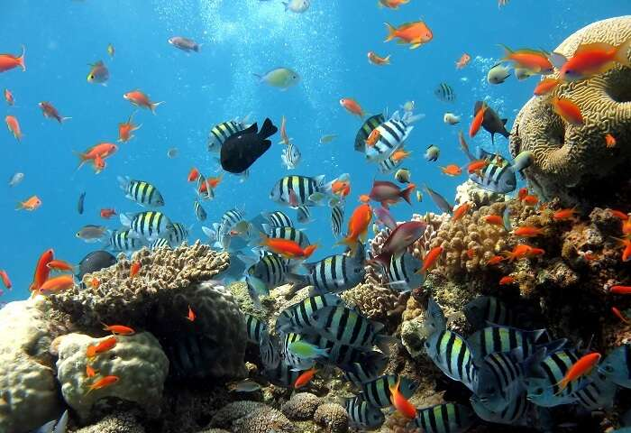 Beautiful fishes and colorful reefs in Sentosa Underwater World