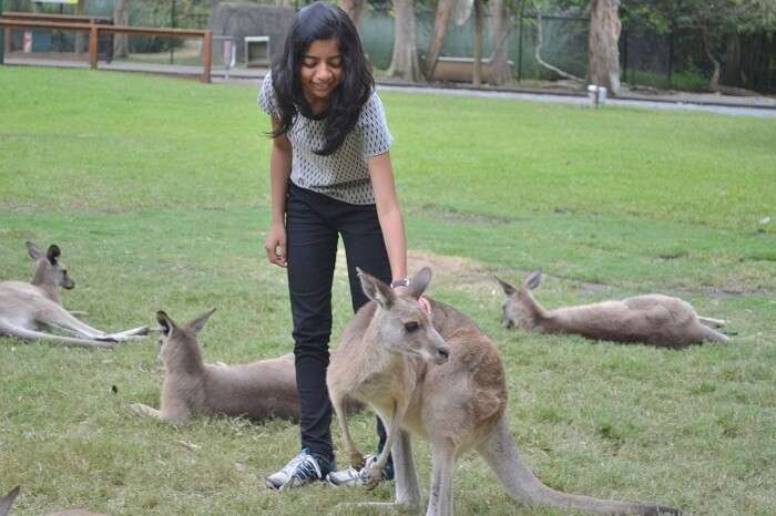 Cuddling Kangaroo at Currumbin Wildlife Sanctuary