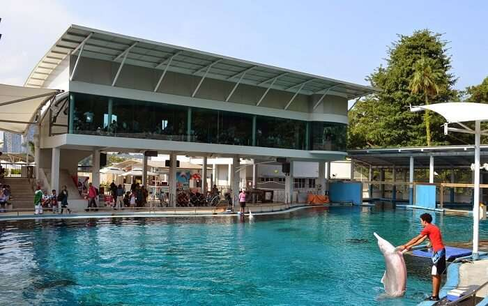 Dolphin Suite in Sentosa Underwater World