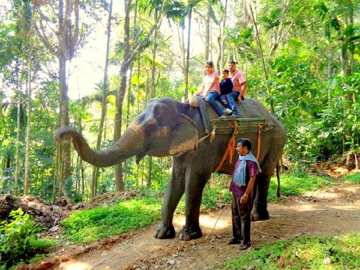 Elephant ride in Elephant Park enroute Kochi