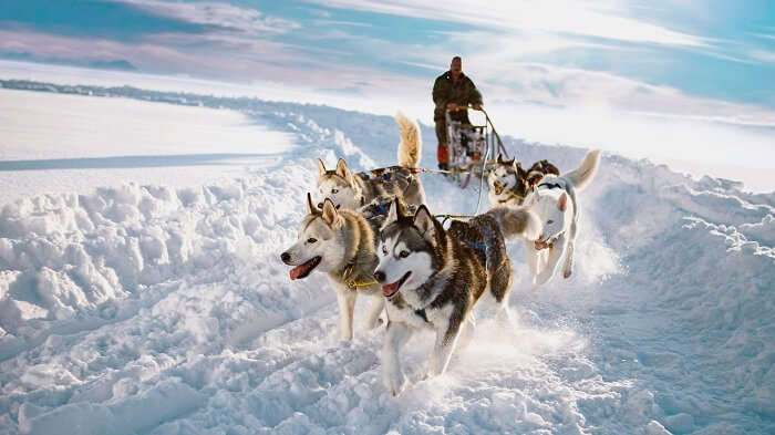 Husky Safari at Kakslauttanen Village is one of the recreational activities you can indulge in