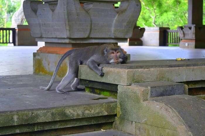 At the Monkey forest