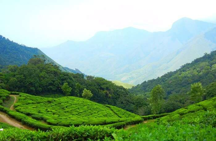 Kannan Devan Hills