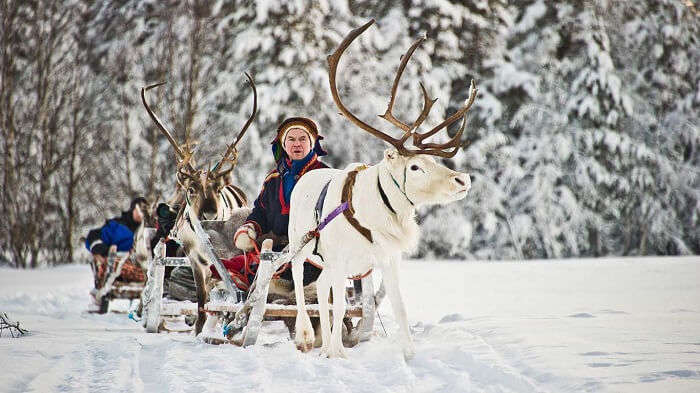 Reindeer Safari is one of the most enthralling fun activities at Igloo Resort in Finland