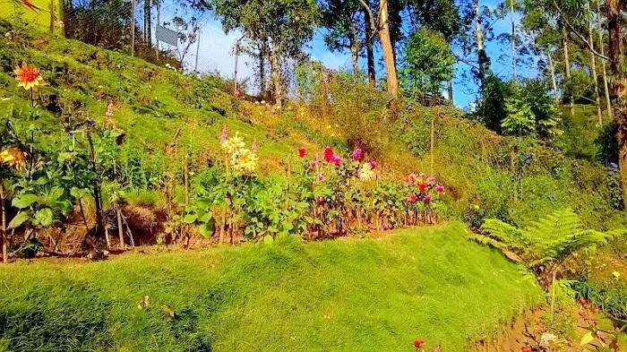 Rose Garden view in Munnar