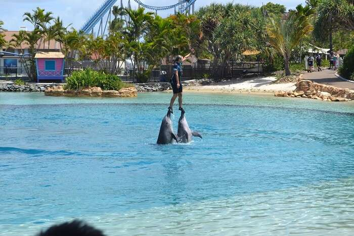 Sea World Dolphin Show Australia