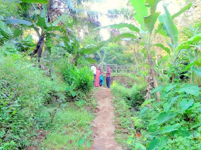Spice garden view in Munnar