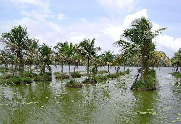 Vellayani Lake in Kovalam is one of the most unusual tourist attractions of the city