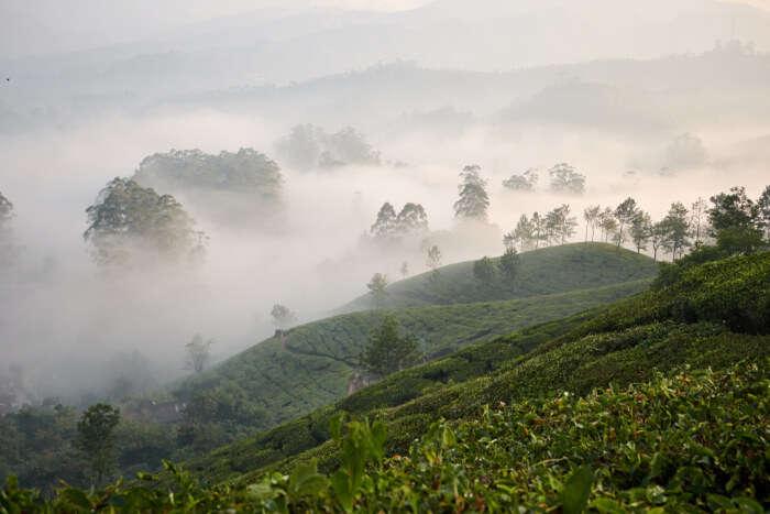 Gorgeous Trekking In Munnar