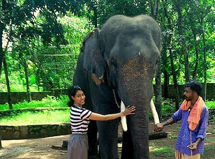 Candida in Elephant park Kerala