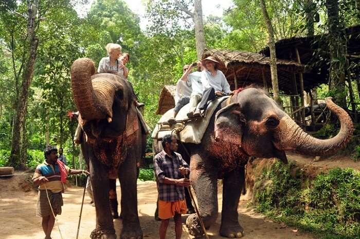 Tourists enjoy elephant rides at Periyar