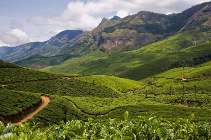 The vast expanse of tea plantations at Kolukkumalai Tea Estate in Munnar