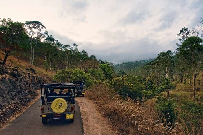 An early morning snap of a Jeep Safari in Thekkady