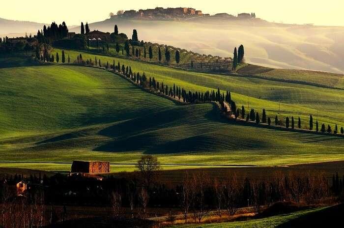 The vast expanse of greenery at Tuscany