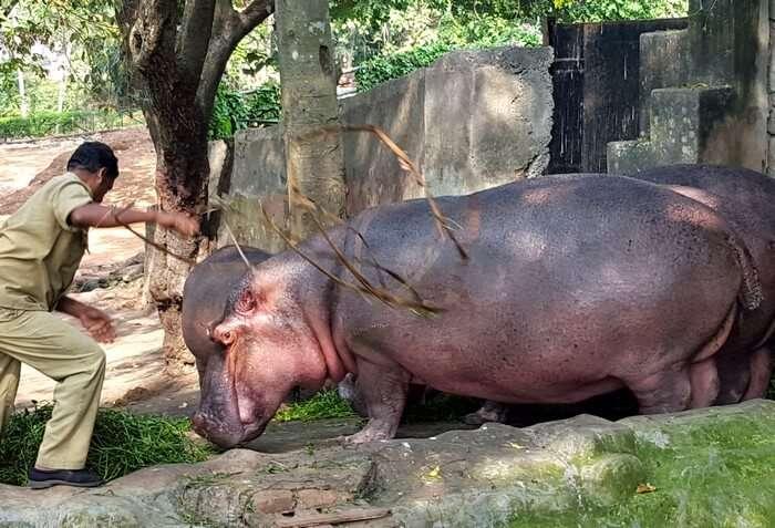 Rhinos at Trivandrum Zoo