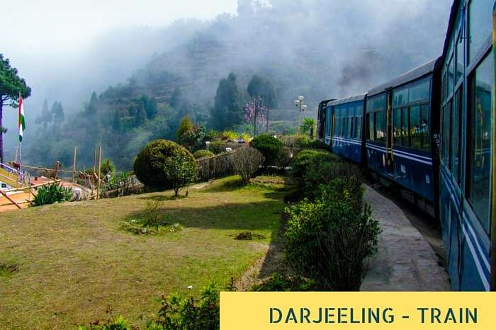 Train passing a beautiful garden and entering into fog at Darjeeling