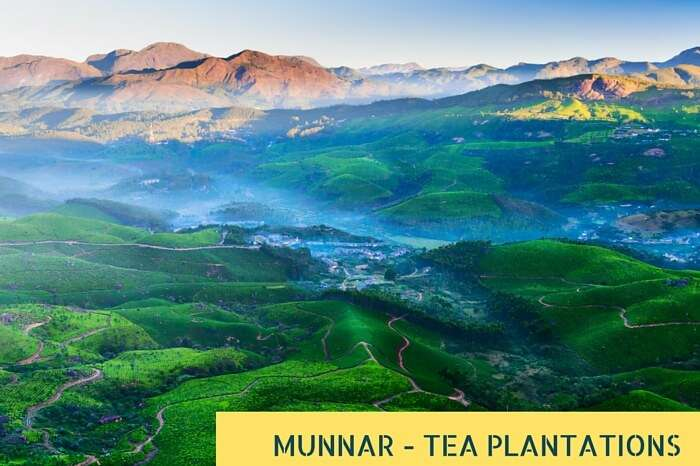 A sunrise snapshot of a foggy morning at tea plantation valley in Munnar