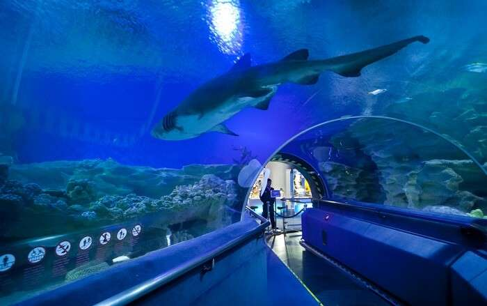 Sharks floating in the overhead aquarium of Aquaria KLCC – one of the best places to visit in Kuala Lumpur