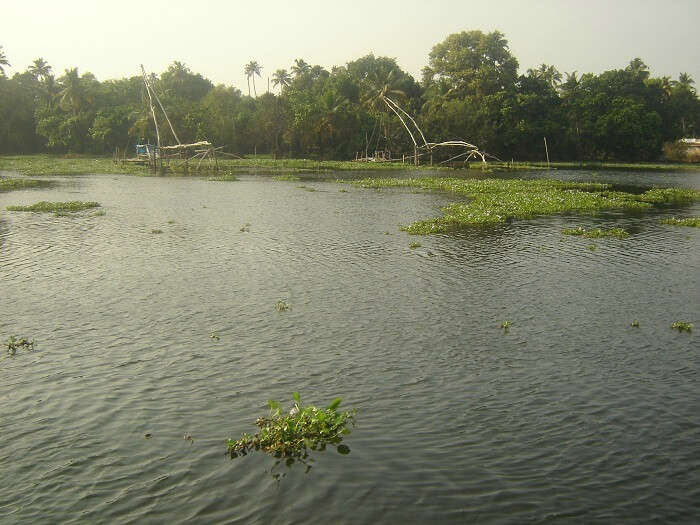 Lake in Alleppey