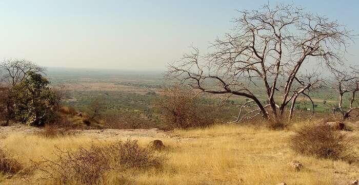 Greenery in Ranthambhore
