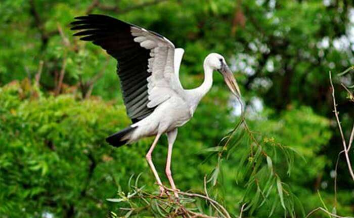Kumarakom Bird Sanctuary is one of the best places to visit in Kumarakom