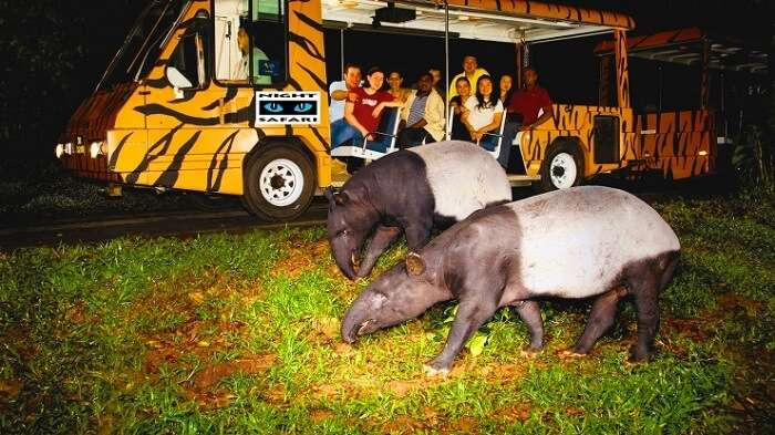 Group of tourists looking out at animals on their night safari in Singapore