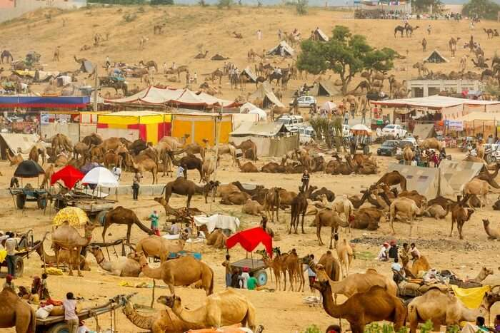 A bird's eye view of the fairground of Pushkar Camel Fair