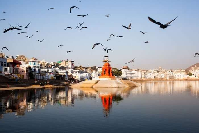 Birds flock away from the Pushkar Lake on a fine evening
