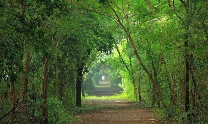 A beautiful pathway through the Theosophical society is among the most romantic places in Chennai