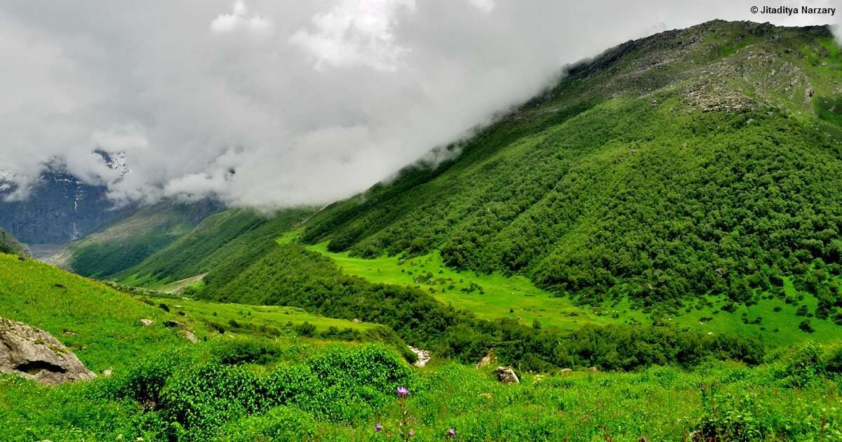 The lush green valley of the Valley of Flowers