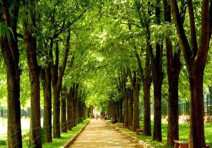Trees lined up in the enchantingly beautiful Cubbon Park, among the most romantic places in Bangalore for couples