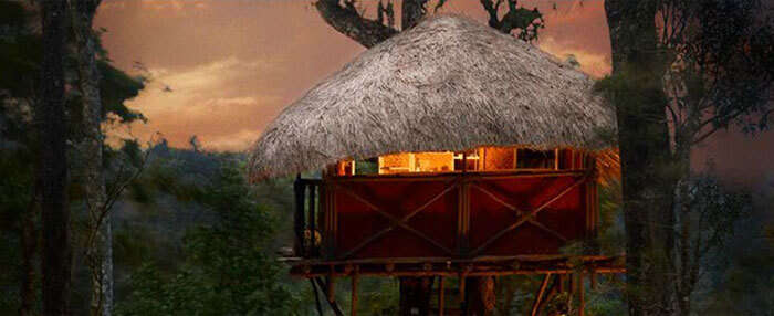 The budget treehouse stay in Coorg
