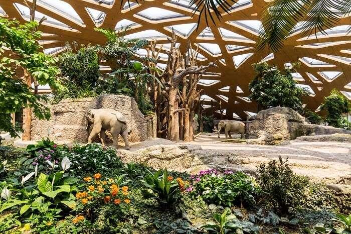 The Kaeng Krachan Elephant Park at the Zurich Zoo