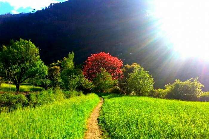 The sun shines over the green and red Tirthan Valley