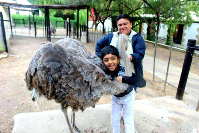 Shivaramakrishnan family enjoying with ostriches