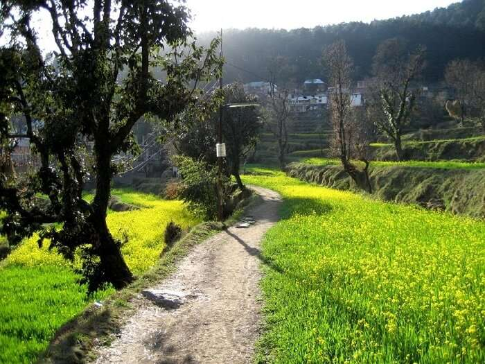 A winding trail leading to Naddi Village in Dharamshala