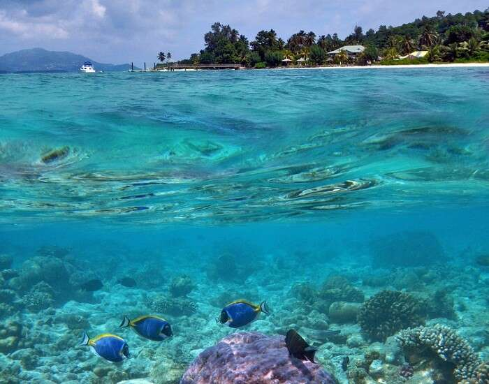 A view of the corals with the Sainte Anne Marine National Park of Seychelles in the backdrop