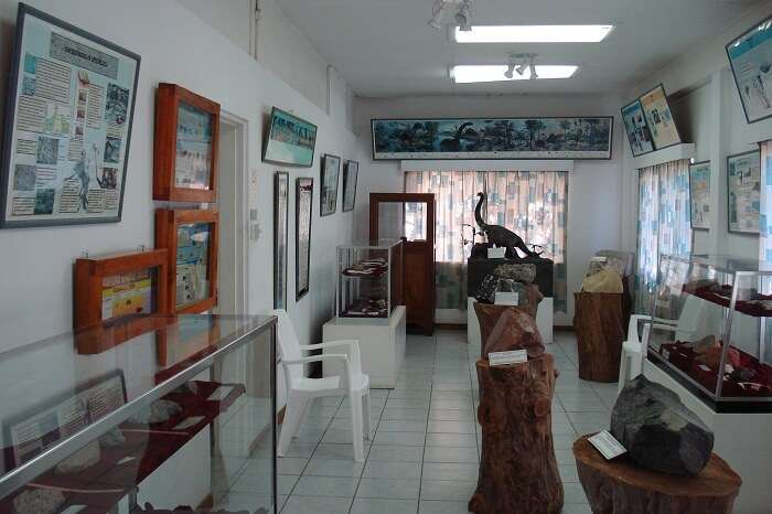Some of the exhibits at the Seychelles Natural History Museum