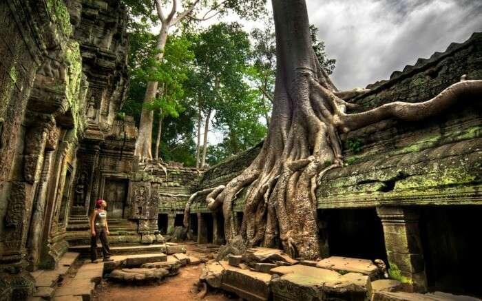 Visit one of Cambodia's greatest tourist attractions: Ta Prohm