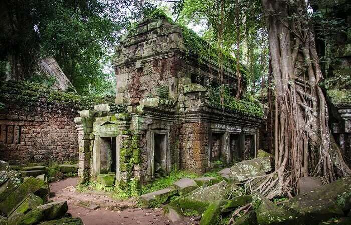 Explore the temple ruins of Ta Prohm in Cambodia, one of the best things to do in Cambodia