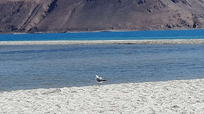 Birds of Leh